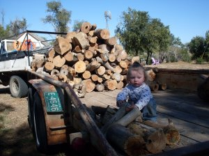 Tyger helping to stack the wood on the trailer.
