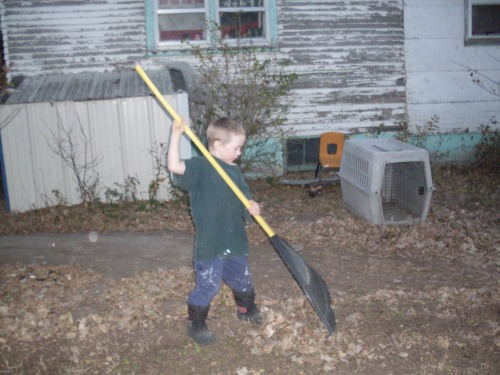 Billy cleaning up the yard.