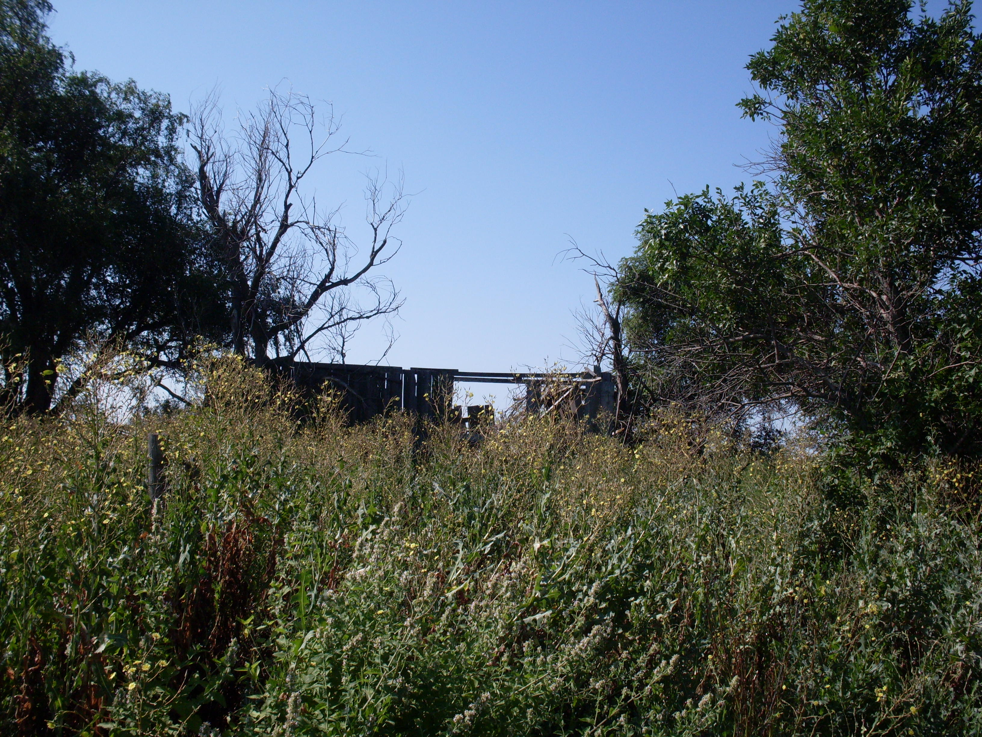 Old Barn Outbuilding Tall Weeds Elm Trees Homestead