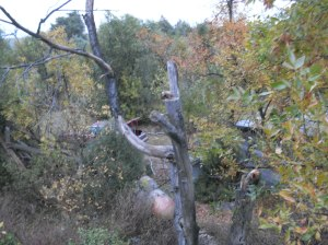 Dead Tree, Propane Tank, Well Path, View from Roof Northward - October 2009