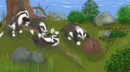 Badger family at play