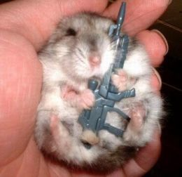 Hamster with Rifle